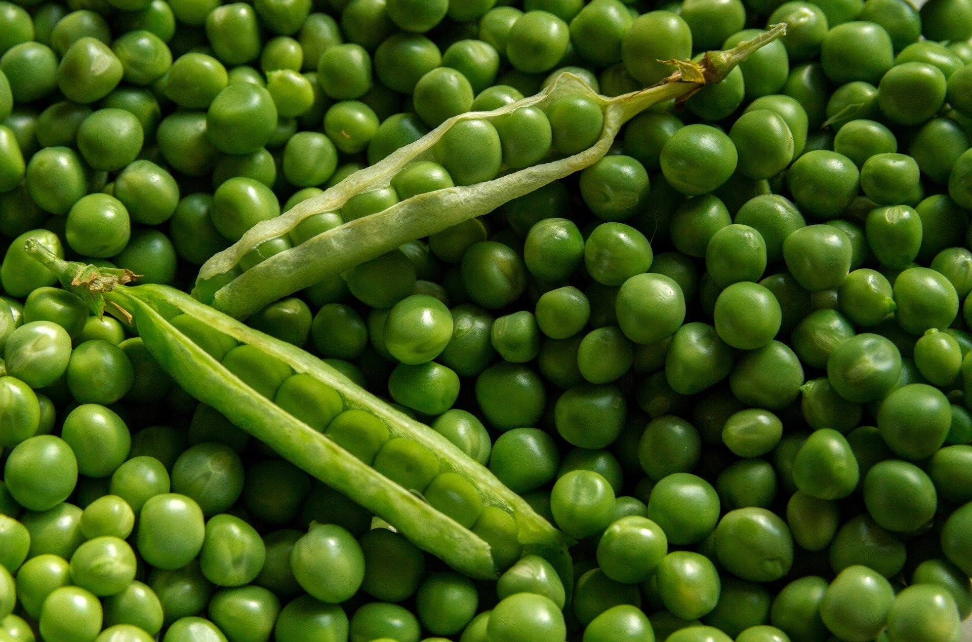 Close up of green peas
